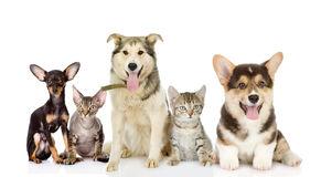 groupe-de-chats-et-de-chiens-dans-l-avant-40607049